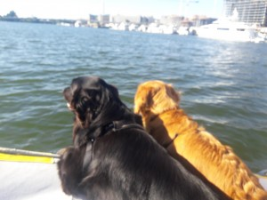 Goose Showing Shiloh around in his dinghy